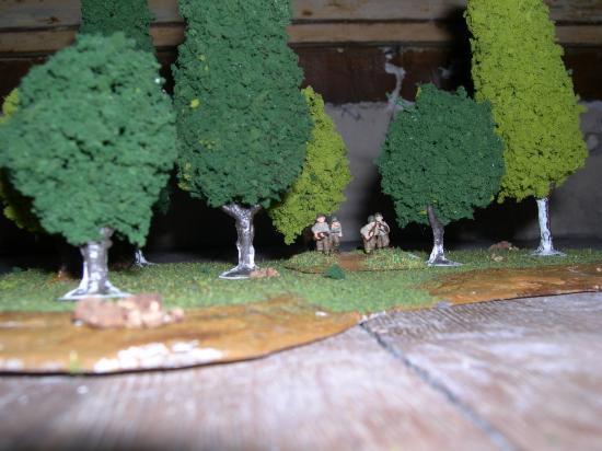 Arbre et forêts